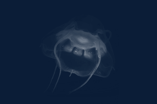 DEEP SEE JELLY FISH